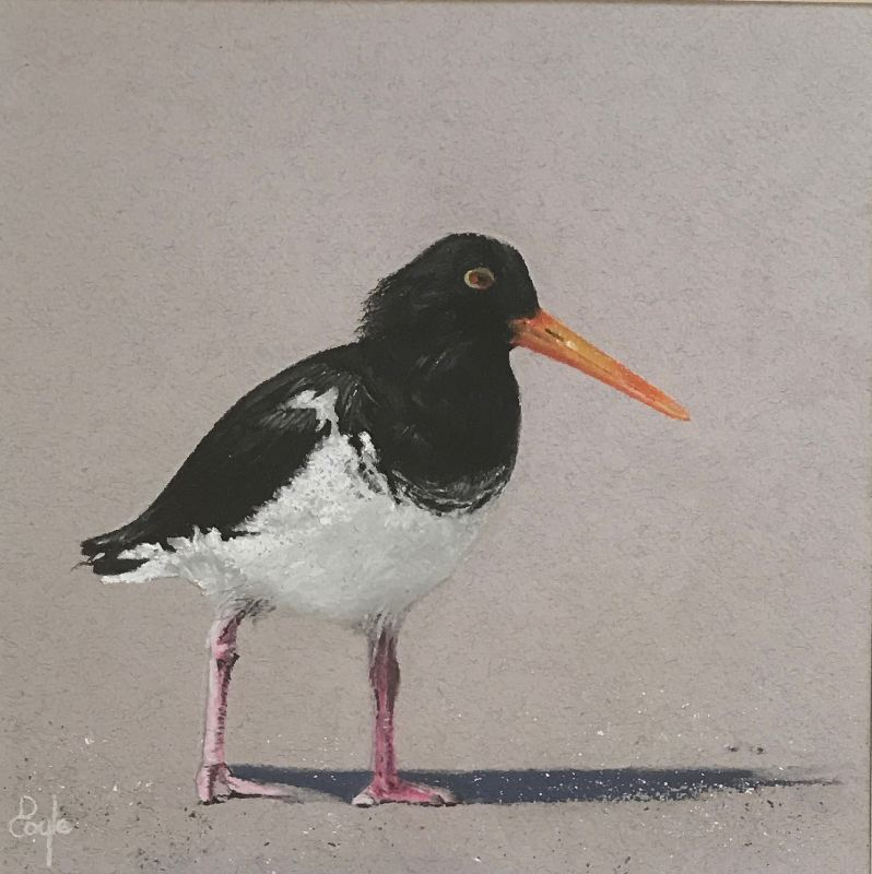 Oystercatcher (SOLD)