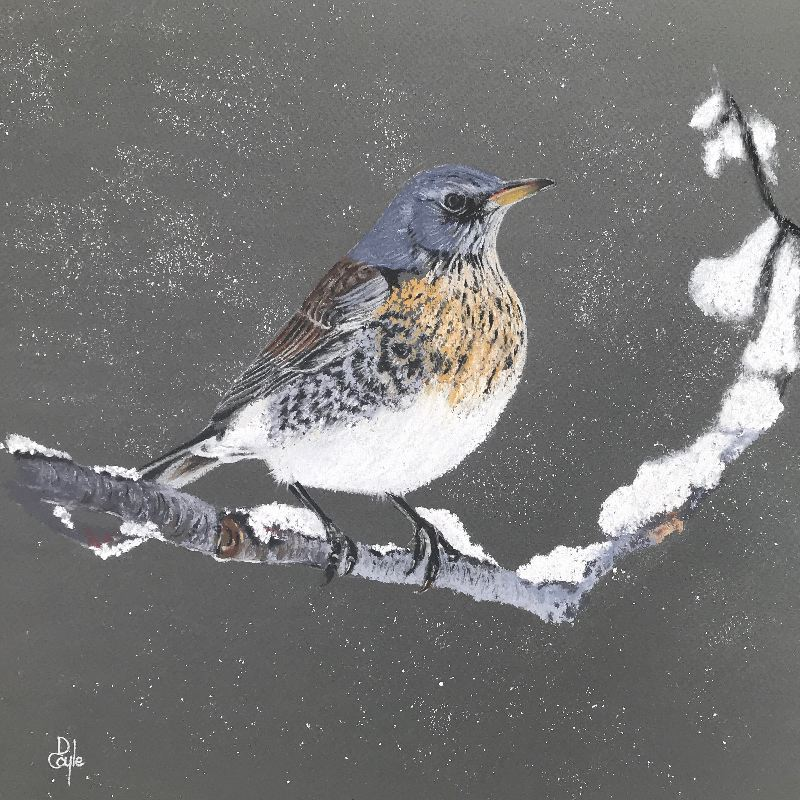 Fieldfare SOLD