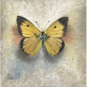 Clouded Yellow (SOLD)