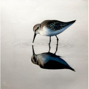 Sandpiper Wading (SOLD)