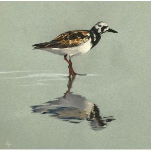 Turnstone Reflection (SOLD)