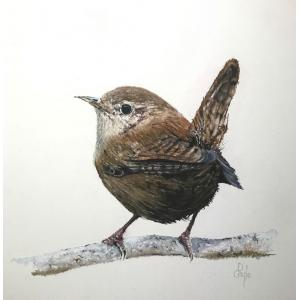 Winter Wren lll